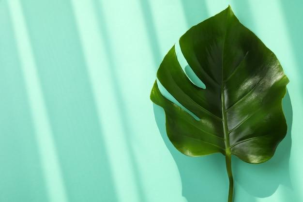 Пальмовый лист на изолированном фоне мяты, место для текста