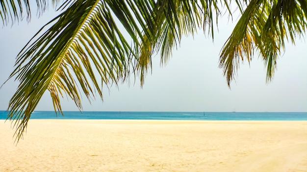 白い砂浜とターコイズブルーの海、モルディブの上のヤシの葉。