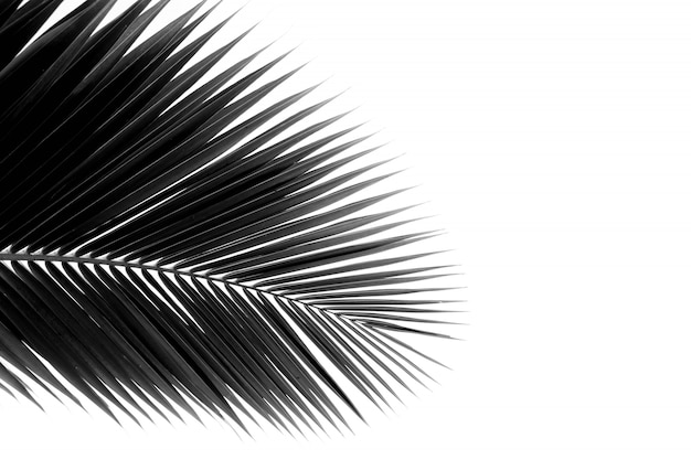 Palm leaf pattern background