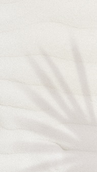 Ombra della foglia di palma su un fondo strutturato della sabbia con lo spazio della copia