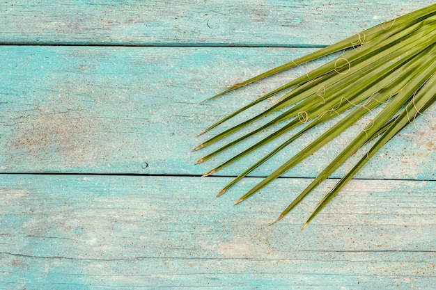 Palm leaf on a trendy turquoise wooden background