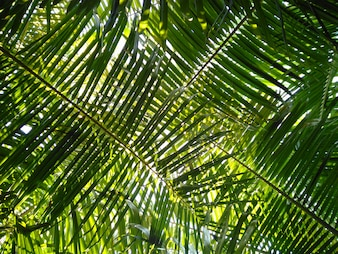 Palm leaf with natural light from sun ray