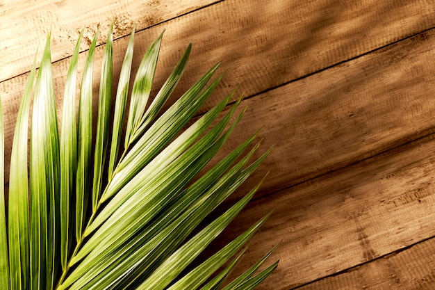Palm leaf on wooden table