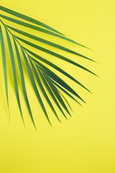 Palm leaf on the yellow background