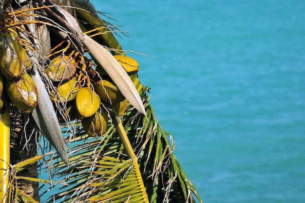 Palm leafs