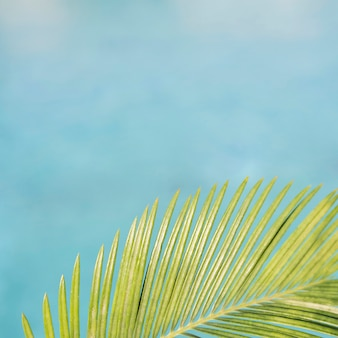 Palm leave with pool background