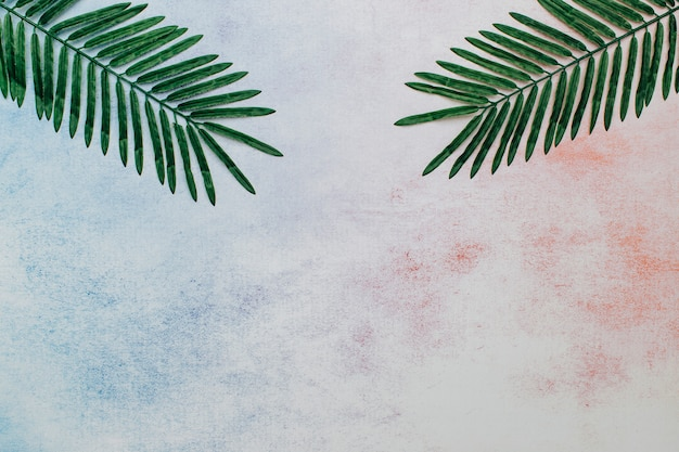 Palm leaves on an abstract background