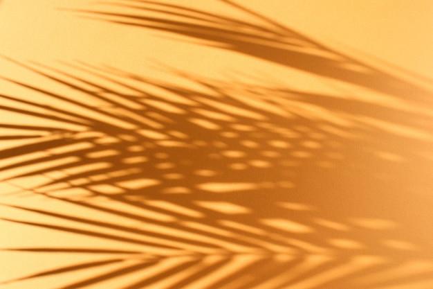 Пальмовые листья и их тень на оранжевом фоне.