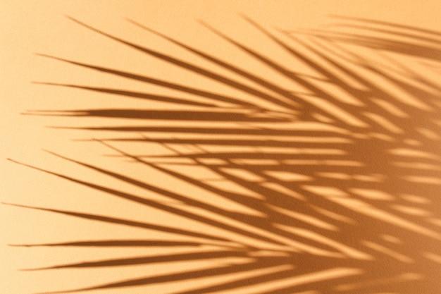Пальмовые листья и их тень на апельсине