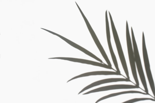Пальмовые листья и их тень на белом