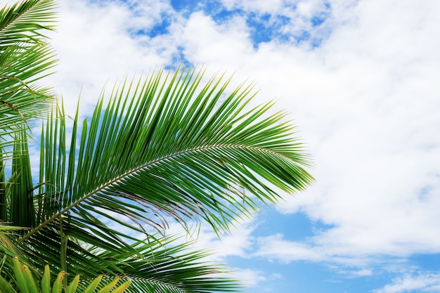 Пальмовые листья в небе с солнечным светом на пляже.