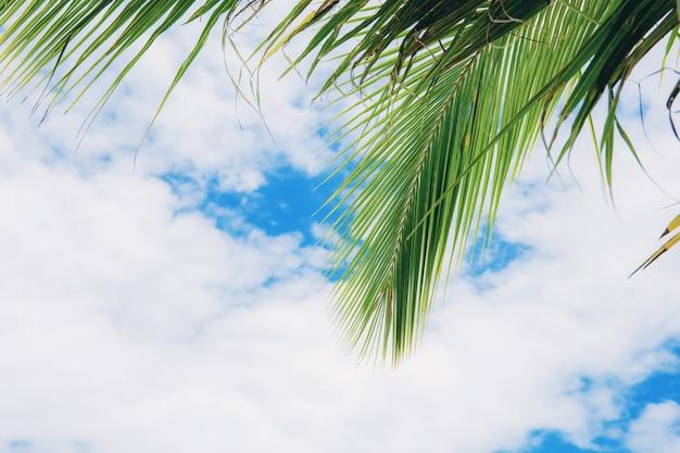팜 하늘에 나뭇잎.