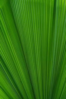 Palm leaves background Premium Photo