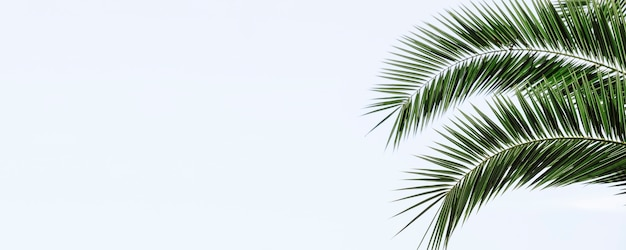 Palm leaves banner background