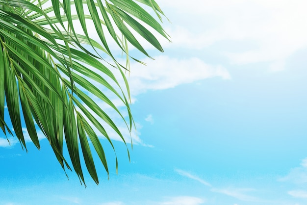 Palm leaves on blue sky background