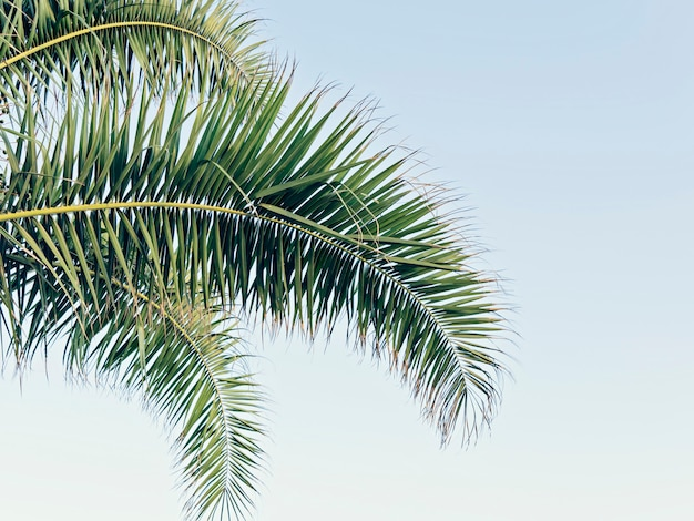 Palm leaves on blue sky with copy space