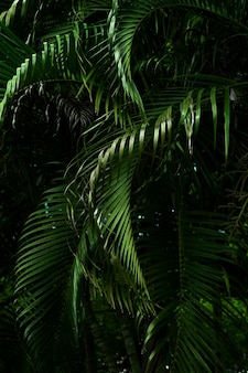 Palm leaves in dark tone background