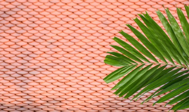 A palm leaves front a orange roof