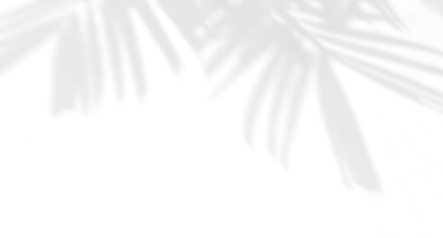 Palm leaves natural shadow on a white wall overlay effect for photo mock up product wall art design presentation