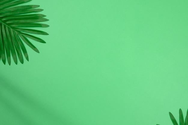 복사 공간이 있는 녹색 배경에 야자수 잎