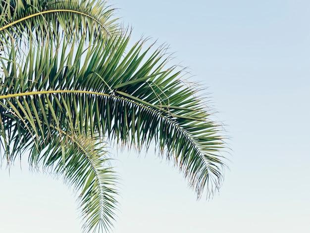 팜 복사 공간와 푸른 하늘에 나뭇잎