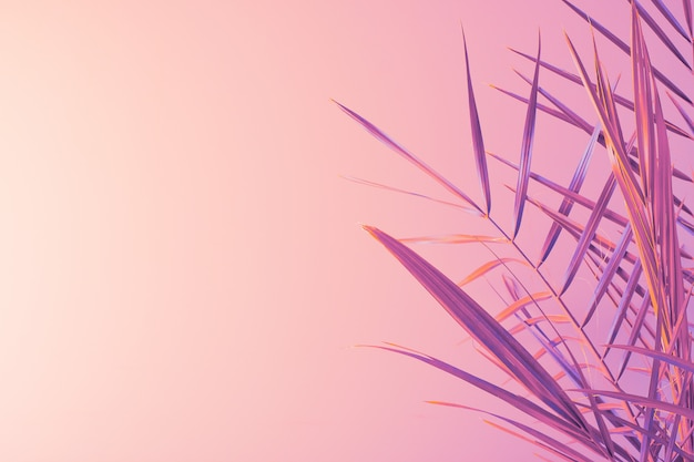 グラデーションの背景にヤシの葉