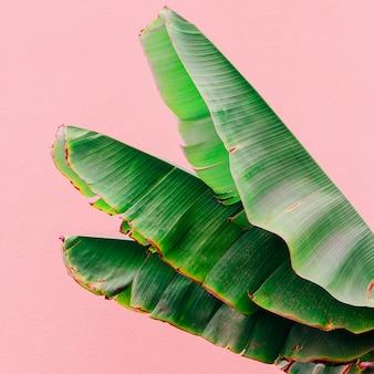 ピンクの壁にヤシの葉。ピンクのコンセプトアートの植物。カナリア諸島