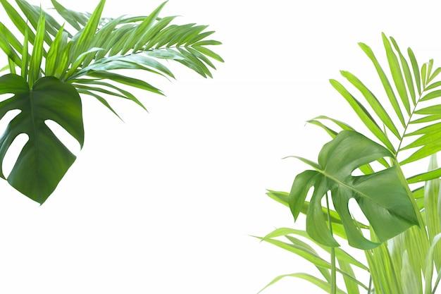 白い背景の上のヤシの葉