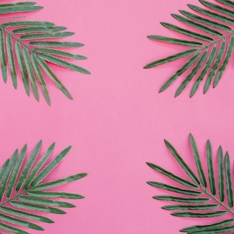 Palm leaves on pink background situated on the four corners