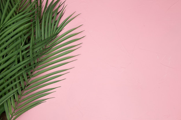 Palm leaves on pink background