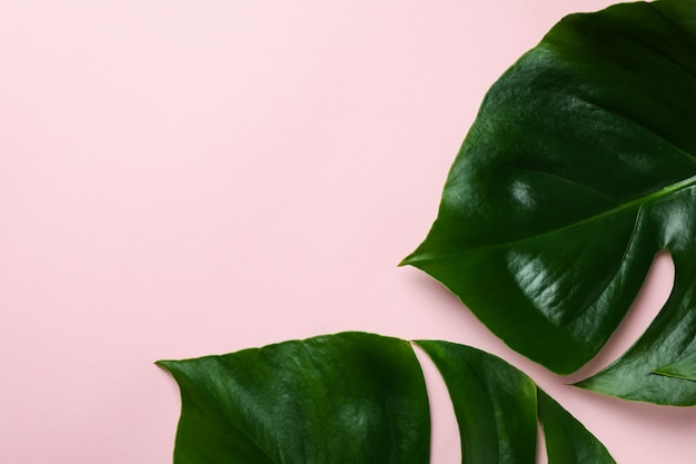 Palm leaves on pink isolated background, space for text