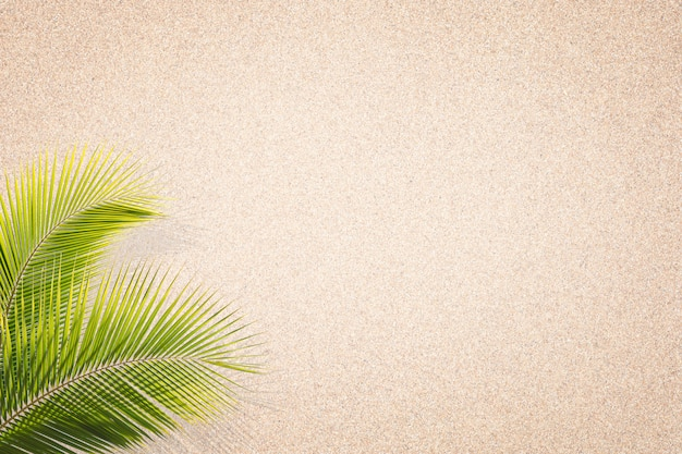 Palm leaves on sand texture background . brown sand. background from fine sand. sand background