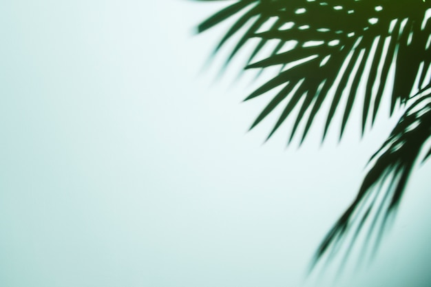Palm leaves shadow on blue background