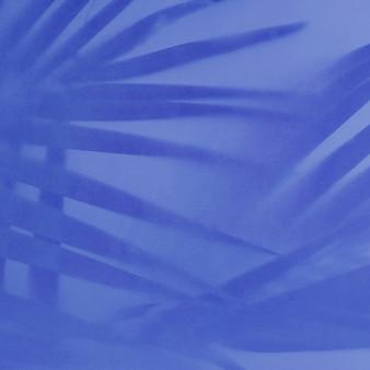 棕榈叶的阴影在蓝色的背景