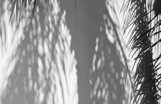 Palm leaves shadow on cement wall