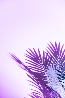 Palm leaves shadow isolated on purple background