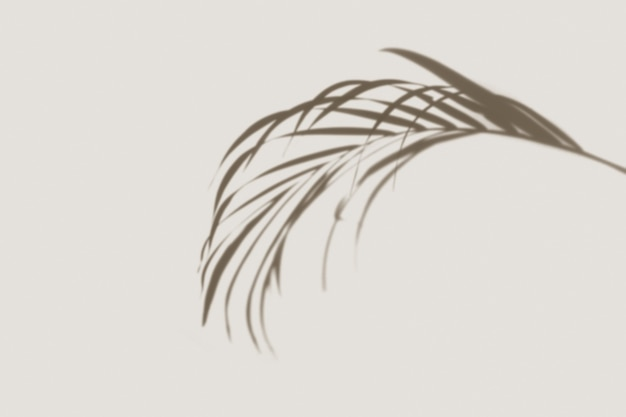 Palm leaves shadow on off white background