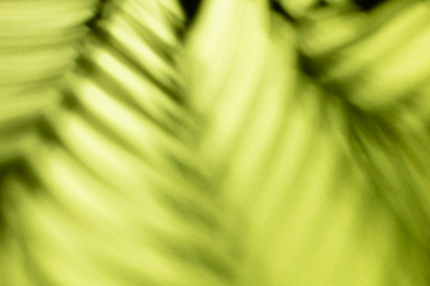 Palm leaves and shadows on a color wall background.