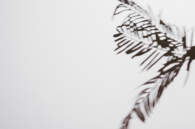 ヤシの葉の白い背景で隔離の影