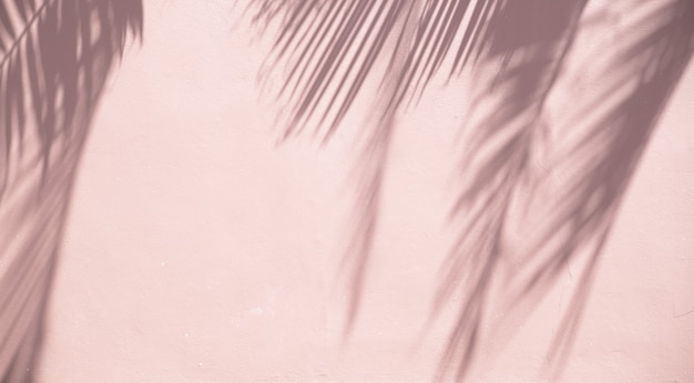 砂浜の壁にヤシの葉の影