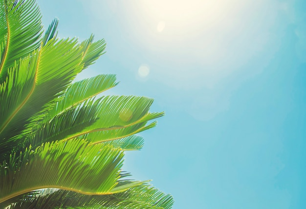 Palm leaves on sky background