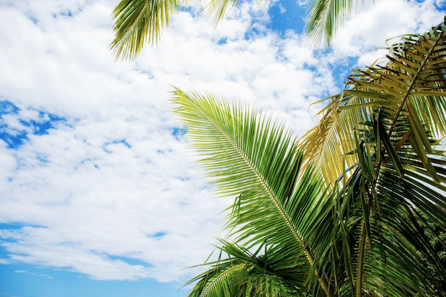 Palm leaves at sky.