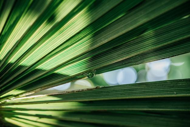 야자수 잎 질감 배경 그림자
