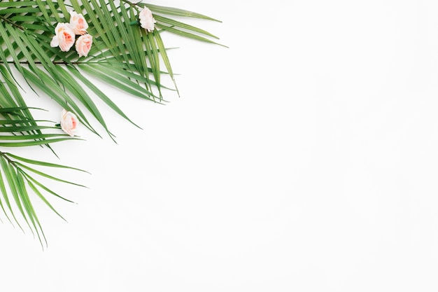 Palm leaves on white background with copy space