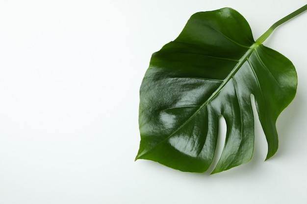 Palm leaves on white isolated background, space for text