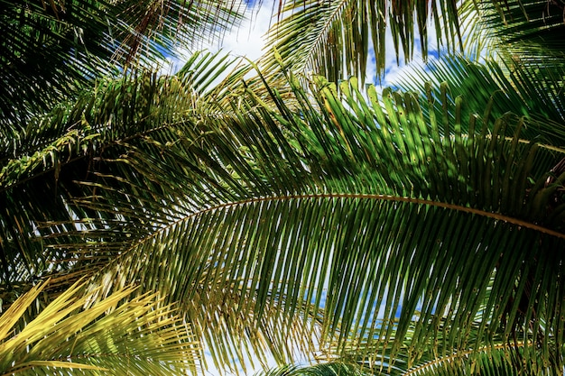 Palm leaves with background