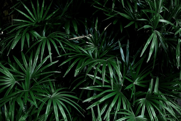 Palm leaves with the green background.