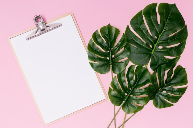 Palm leaves with mock-up clipboard