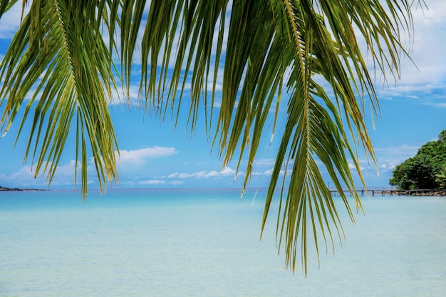 Palm leaves with sea background.