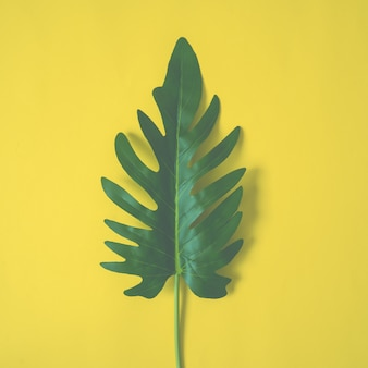 Palm leaves on yellow background, tropical tree.